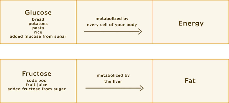 sugar metabolism