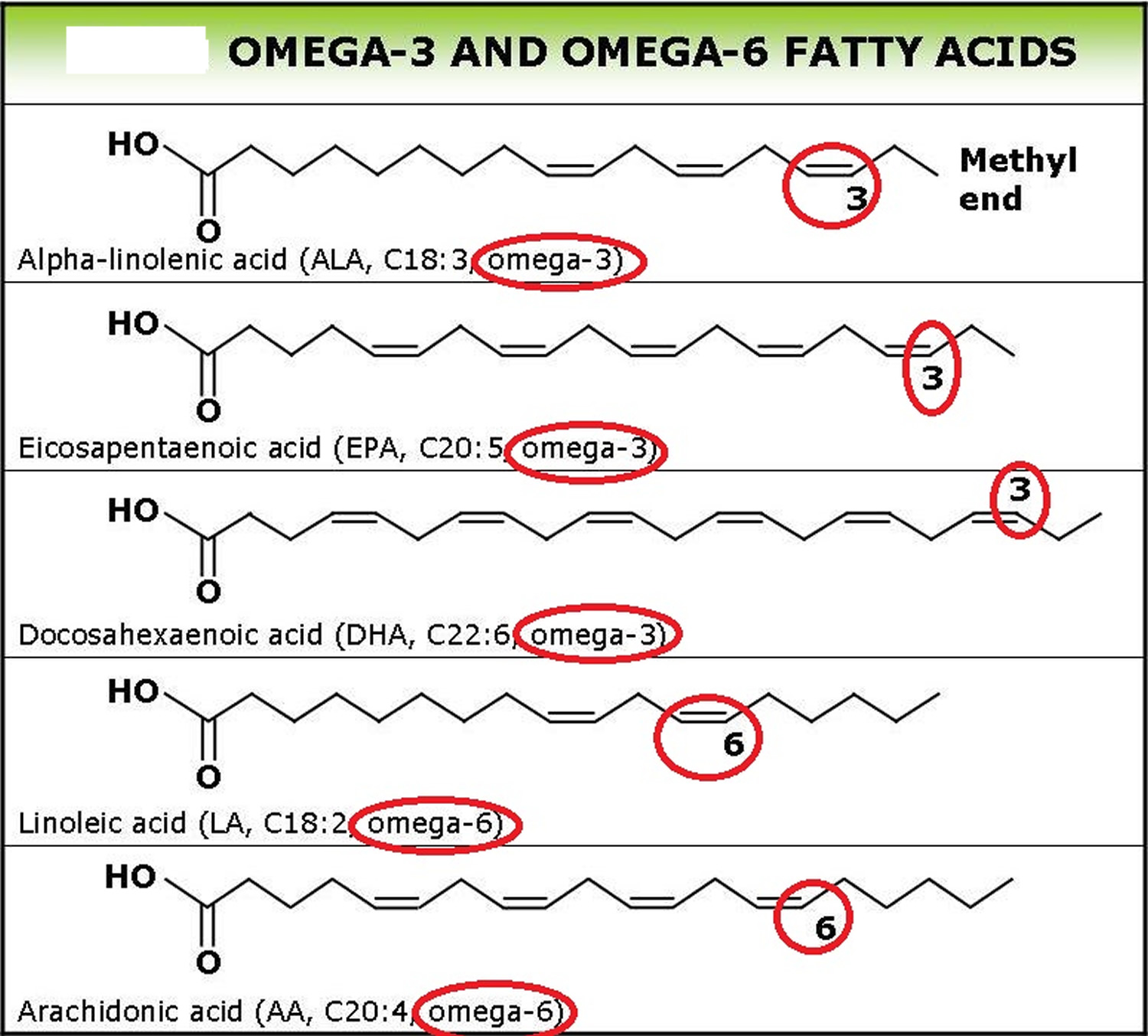 omega-3 and omega-6 fatty acids structure