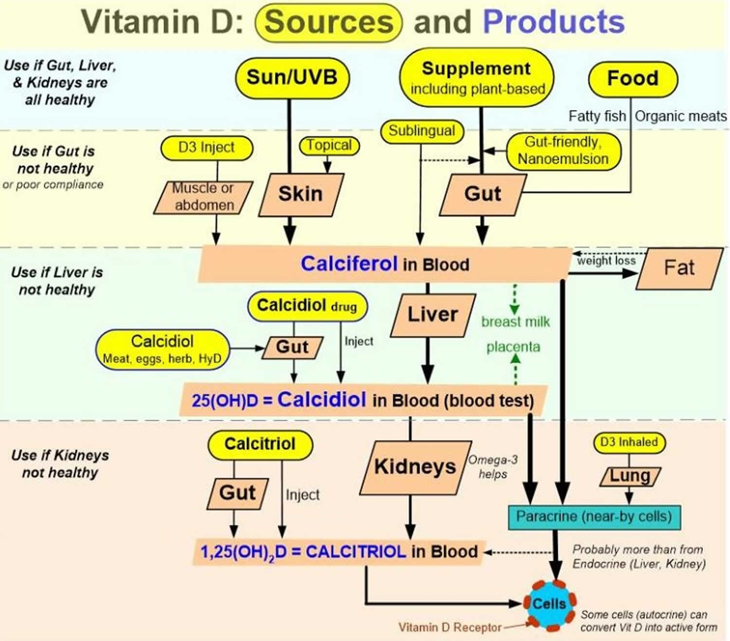 Which Foods Are Best For Vitamin D