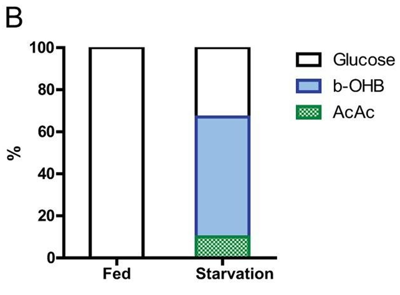 brain substrate utilization