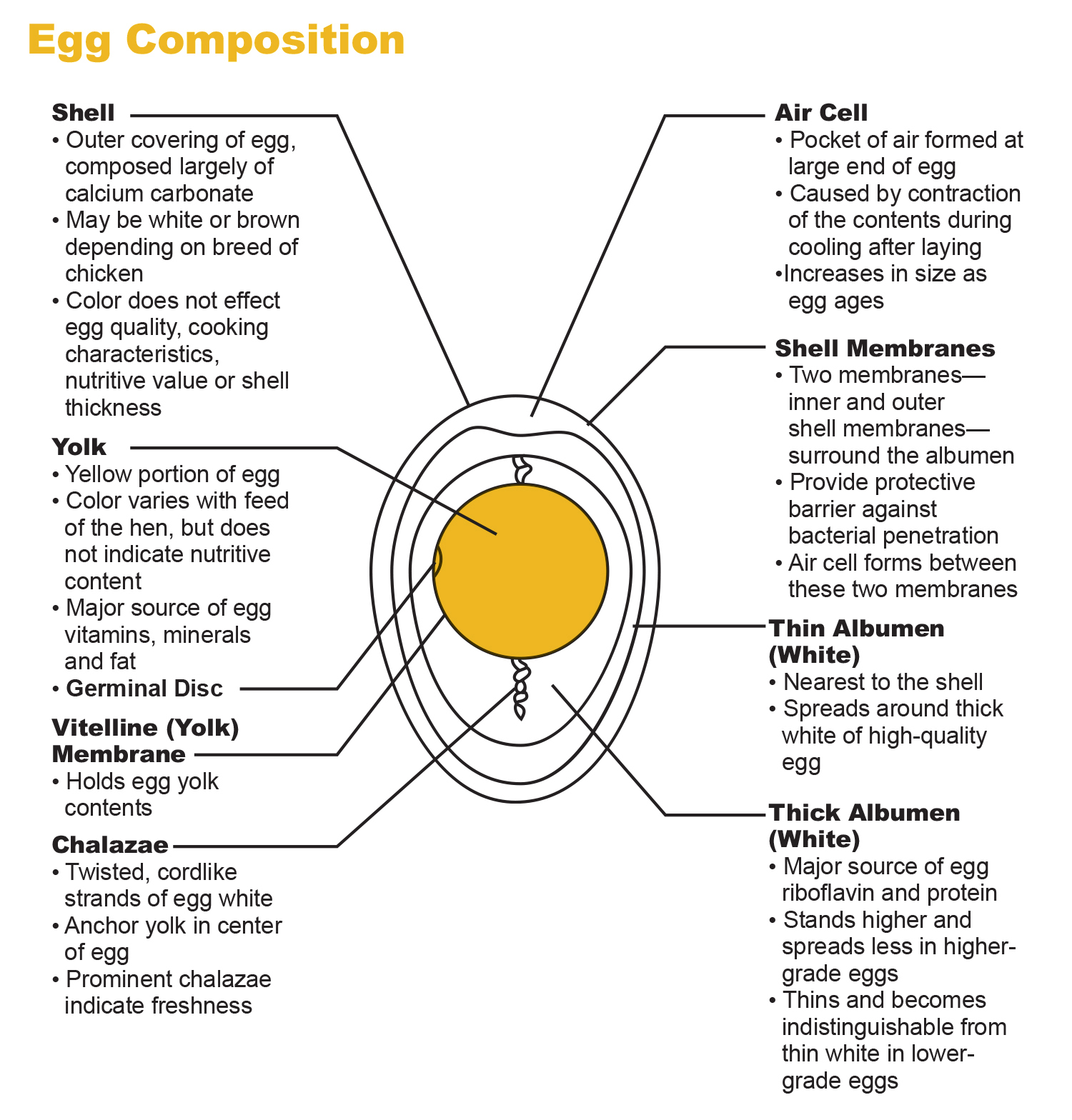 the egg and i nutrition pdf