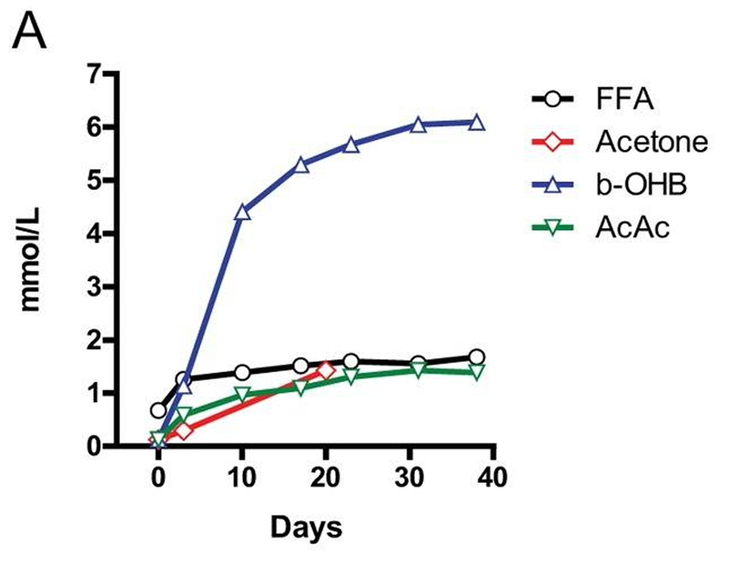 ketone bodies during fasting in humans
