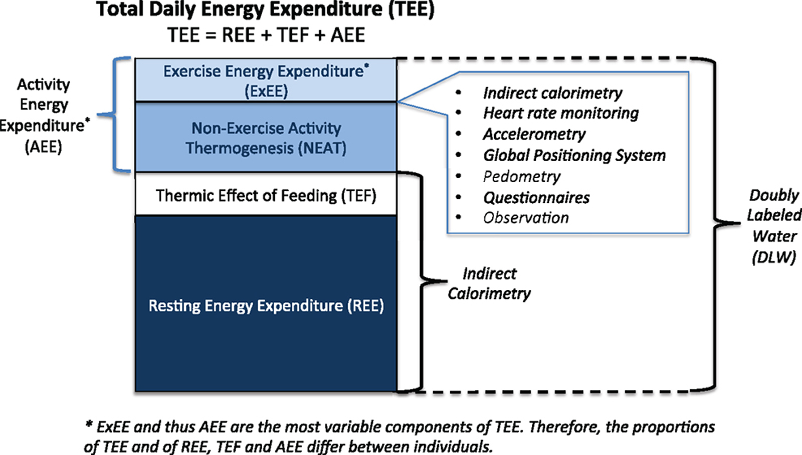 resting energy expenditure
