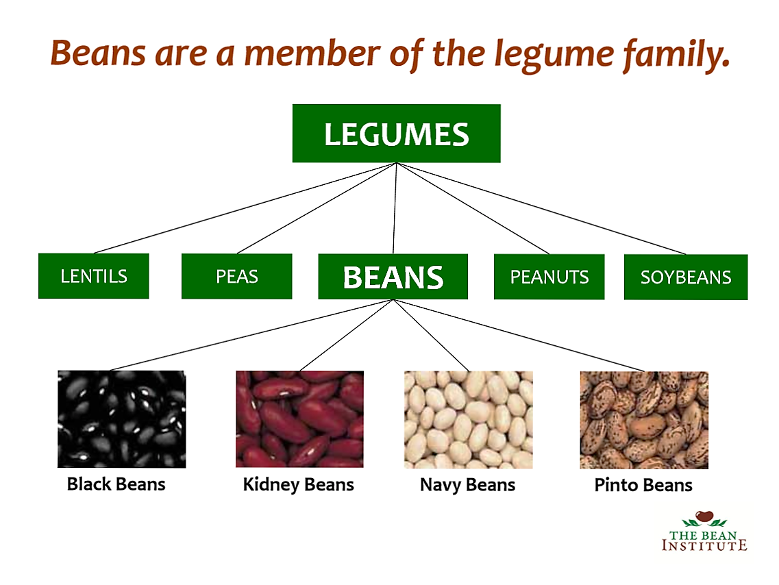 What is a Legume - Are Legumes Good For Health and Weight ...
