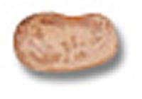 pinto-bean