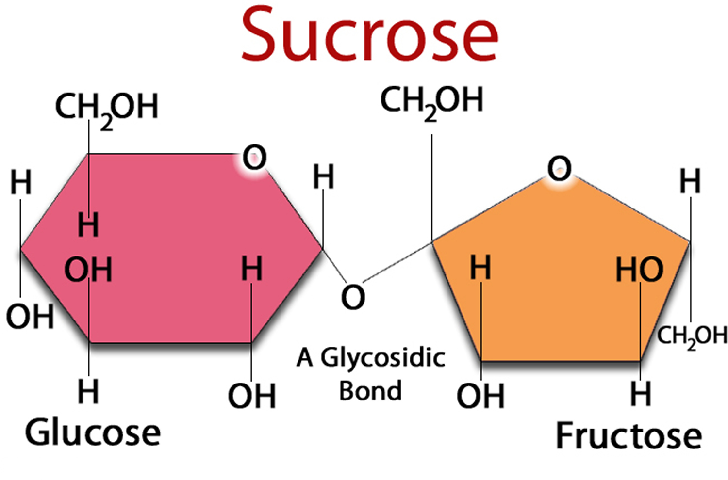 True facts about sugar obesity diabetes heart disease cancers sucrose table sugar is made of two simpler sugars called glucose and fructose gamestrikefo Image collections