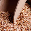 farro nutrition facts