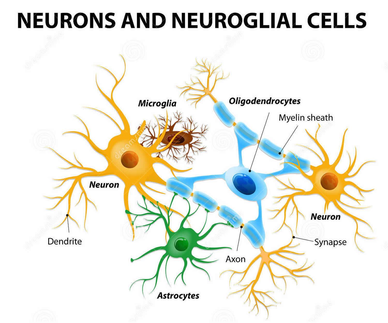 What Is Dementia  Dementia Vs Alzheimer U0026 39 S Disease