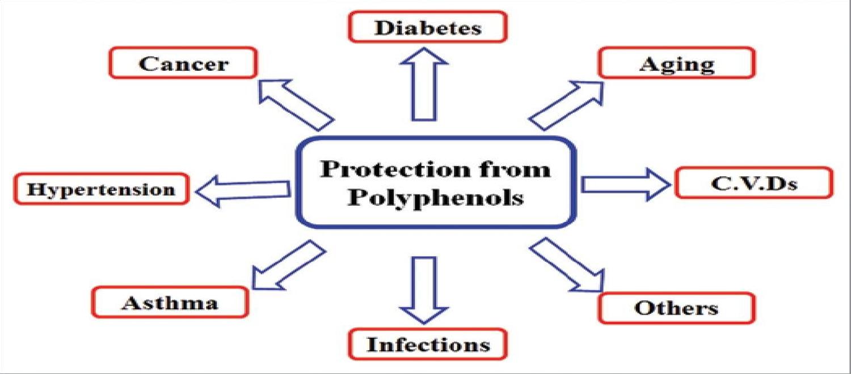 polyphenols health benefits