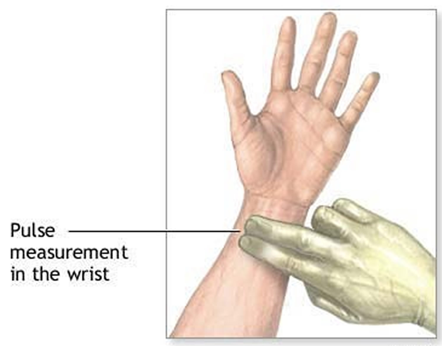pulse measurement at the wrist