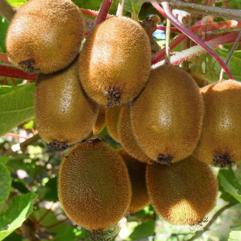 how to eat kiwi fruit benefits