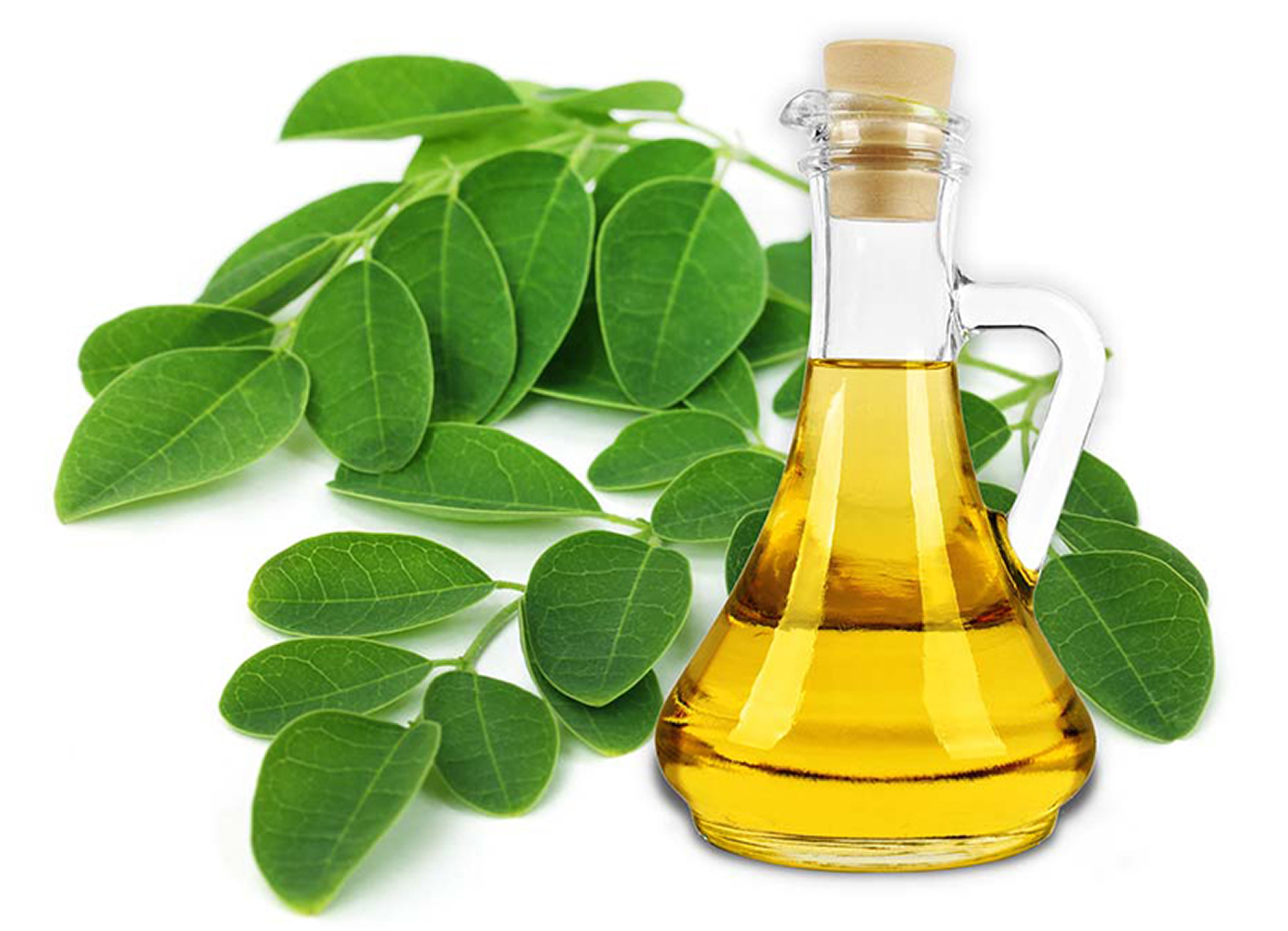Moringa-Oleifera-Oil