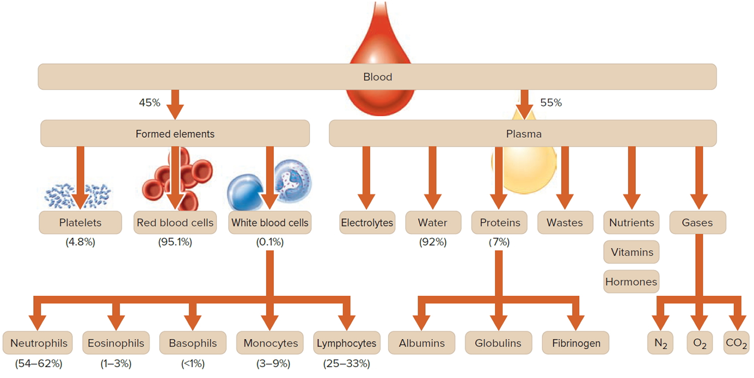 Red Blood Cells Function Causes Of Elevated High Large Cell Erythrocytes In The Diagram You Can See A Whole Composition