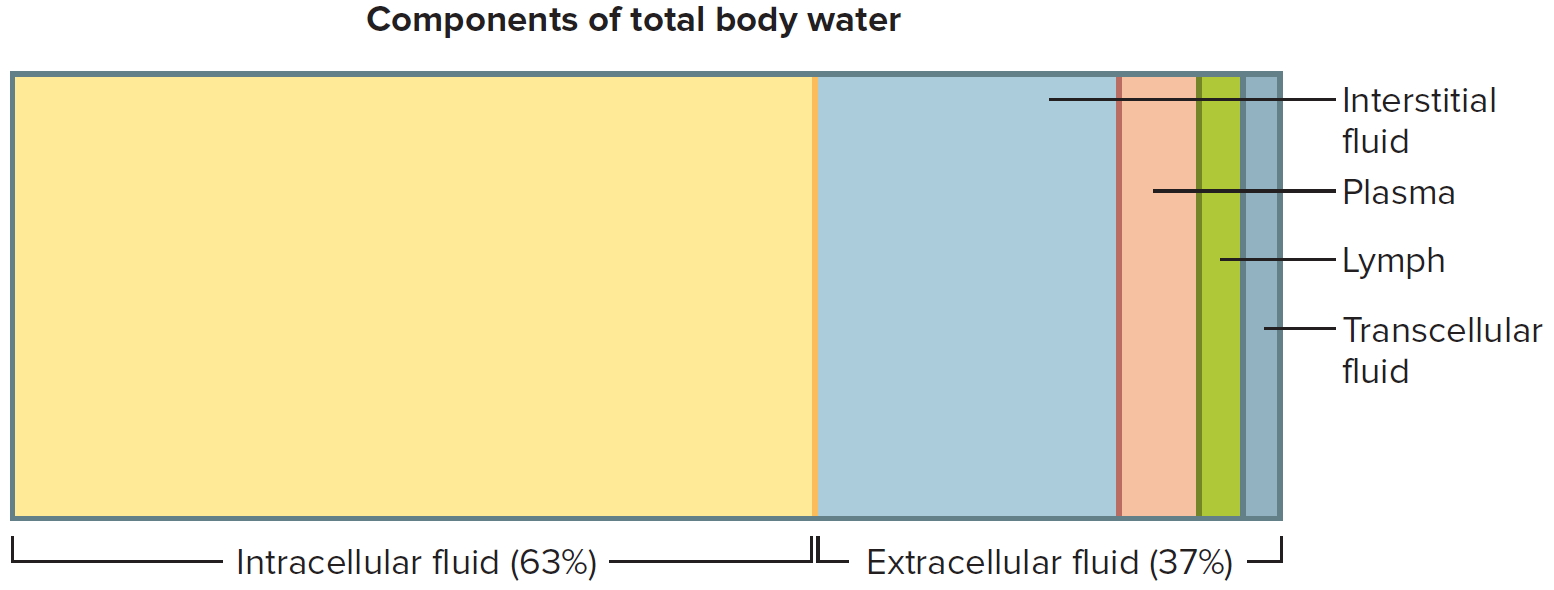 components of total body water