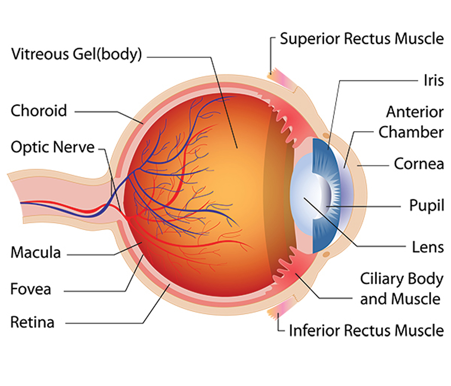 eye disease and eye problems common and rare diabetic thyroid