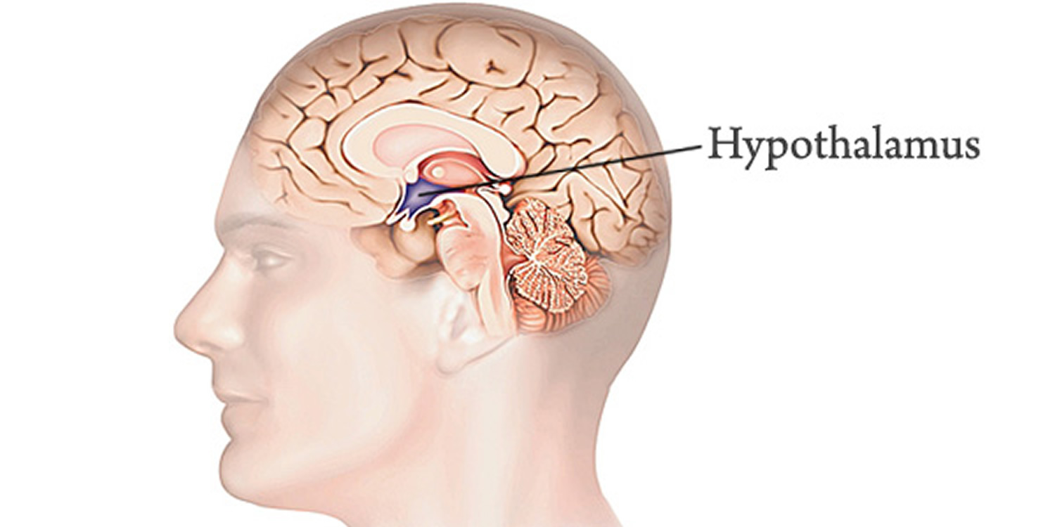 Hypothalamus - Functions, Hypothalamus Hormones and Disorders