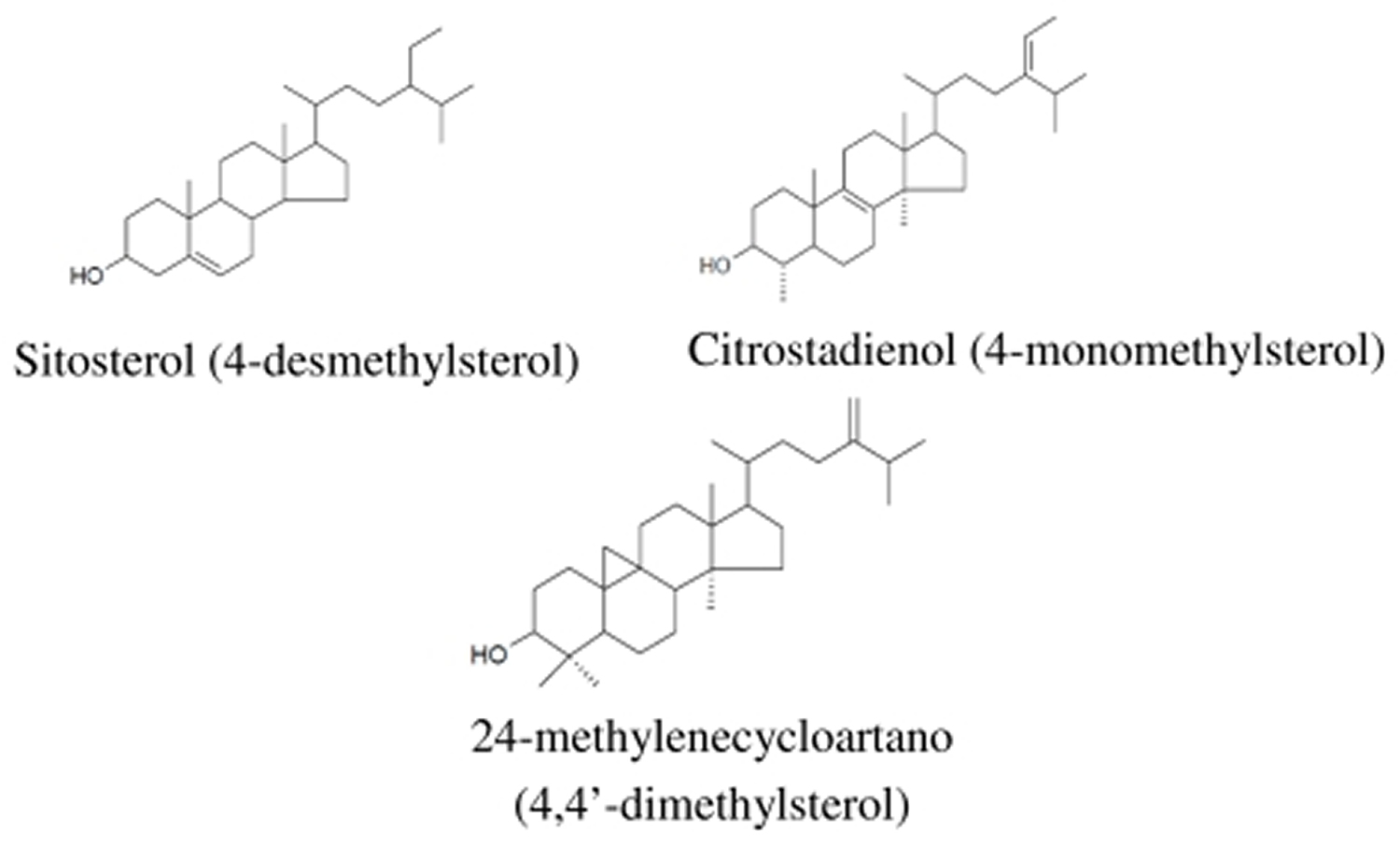 important phytosterols in olive oil
