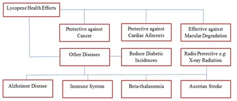 Lycopene health benefits