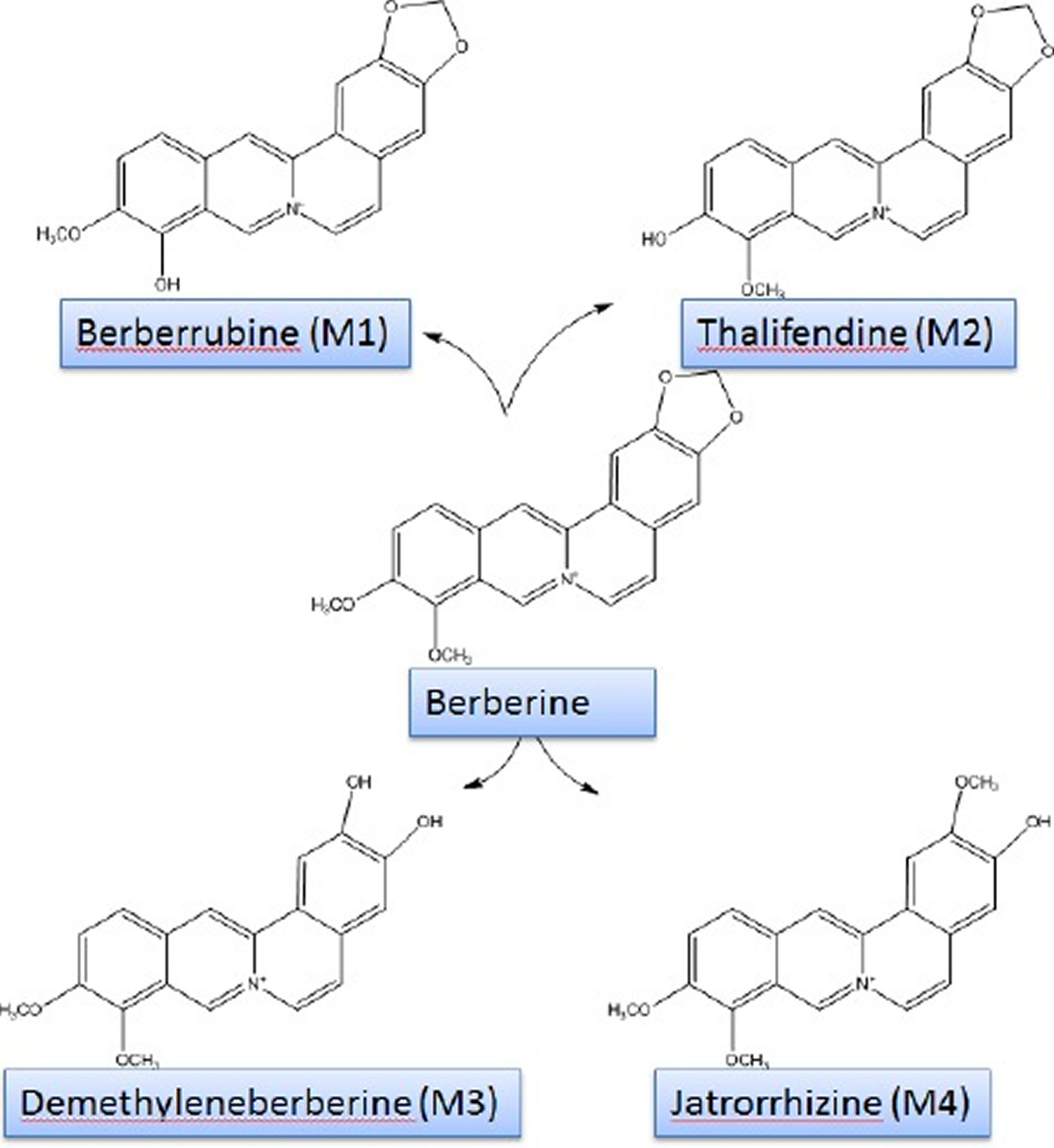 berberine chemical structure and its metabolites