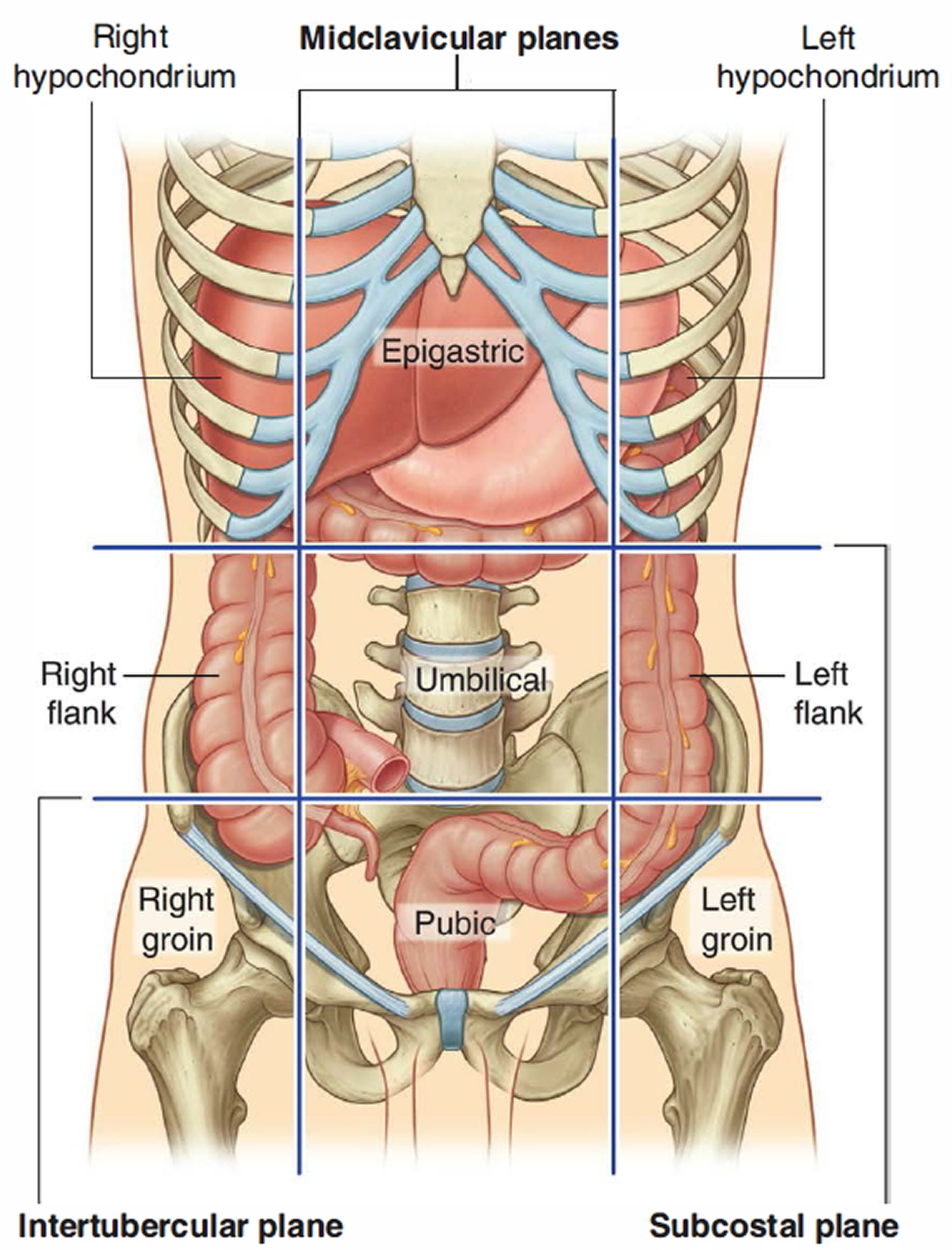 large intestine location