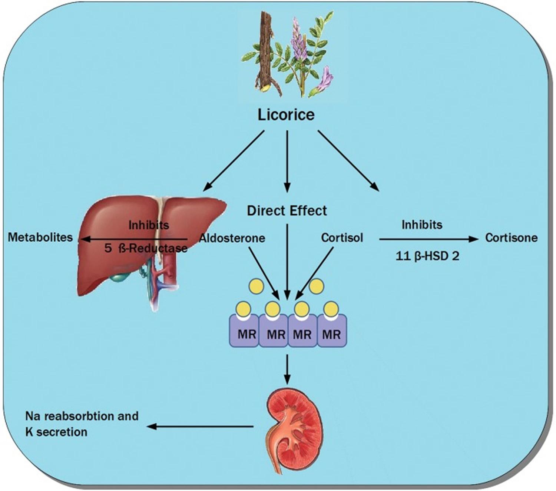 hydroxysteroid dehydrogenase placenta