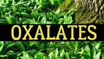 oxalate