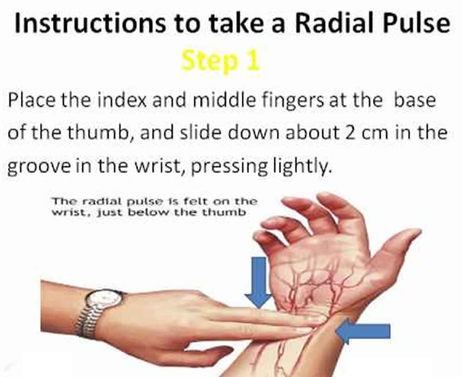 taking a radial pulse