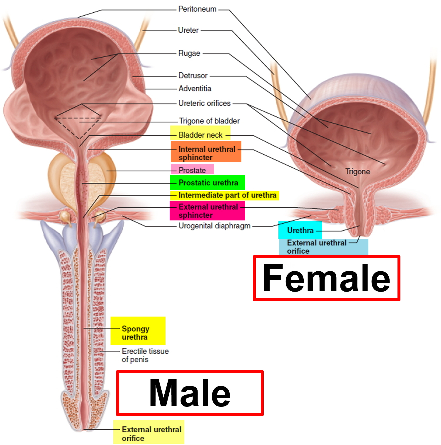 Burning in the urethra - causes and methods of treatment