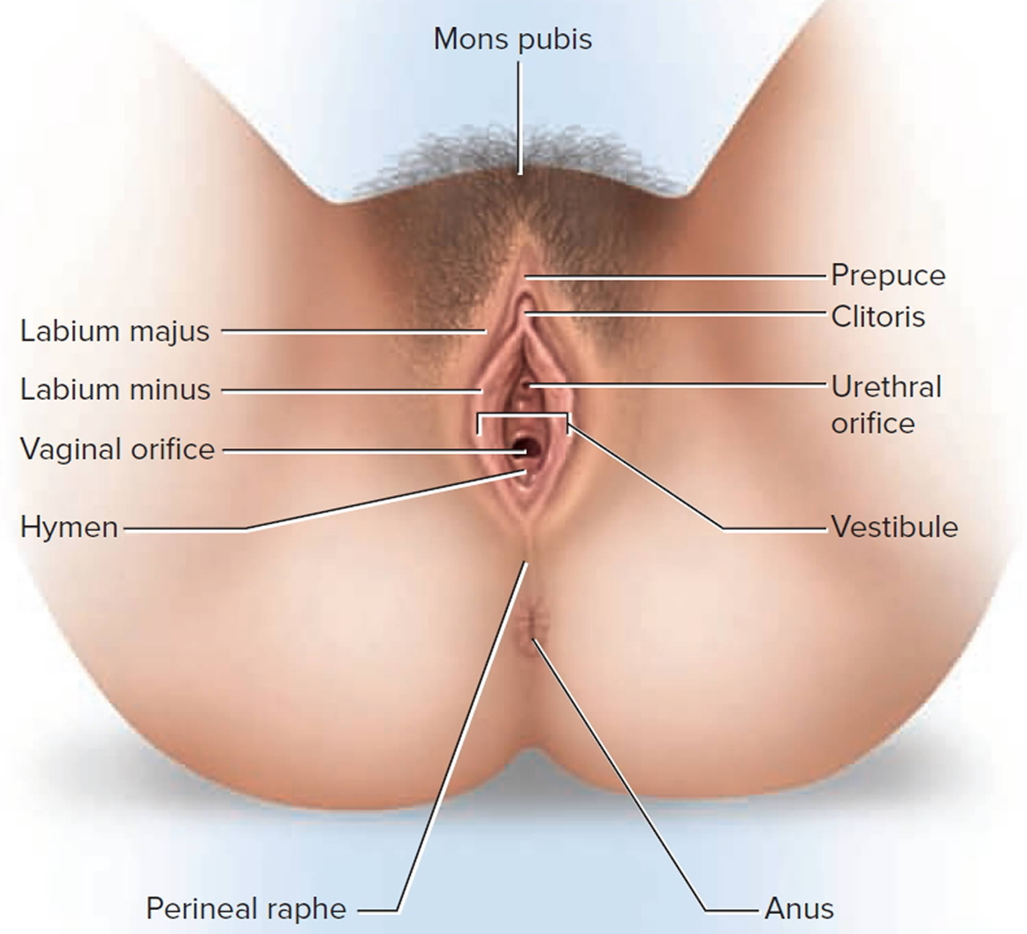 Clitoris inflamation picture