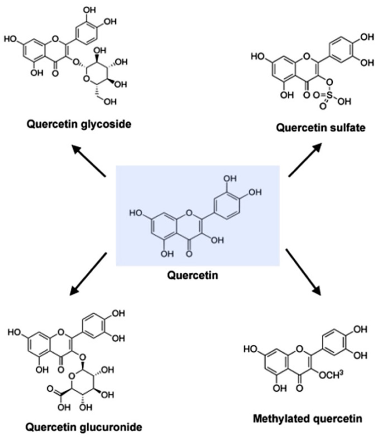 Quercetin Derivatives
