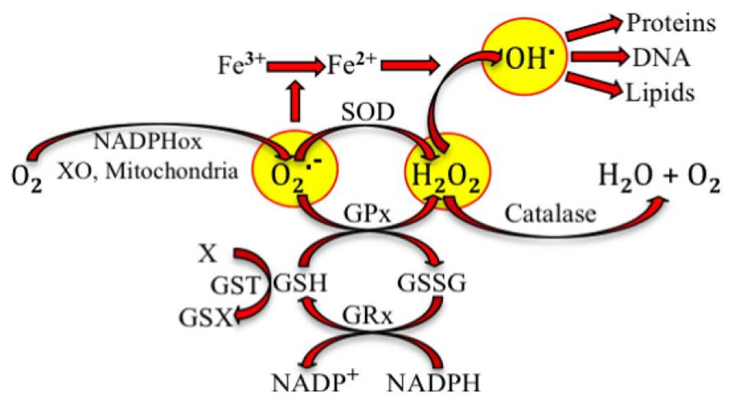 antioxidant reaction