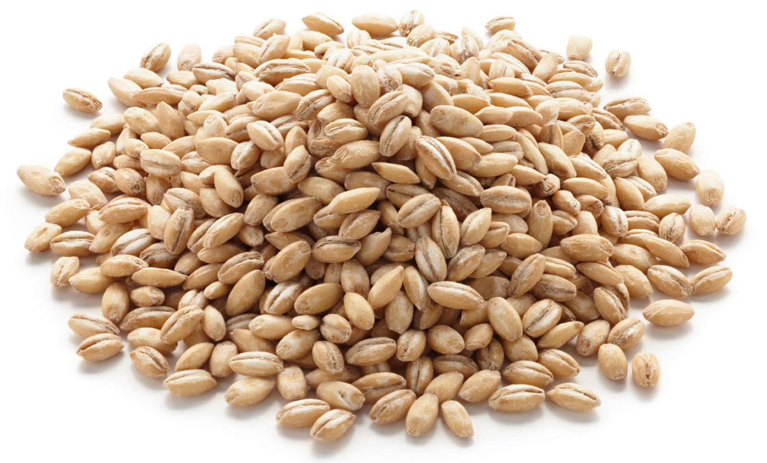 Barley grits: the benefits and harm. Barley grain from what is produced 13