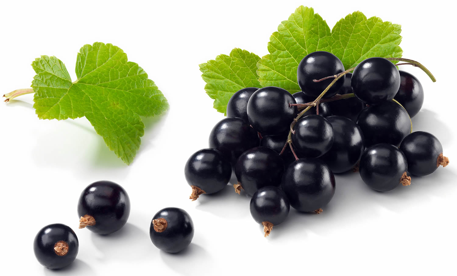 The benefits and harms of black currant for health. What are the vitamins in black currants 59