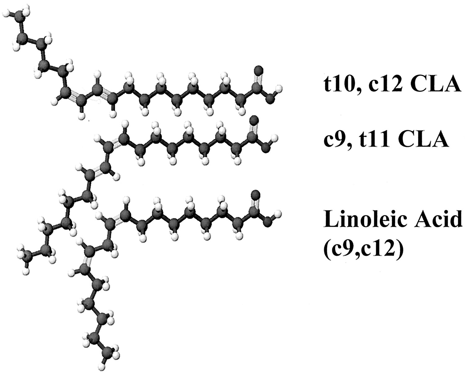 cla - conjugated linoleic acid isomers