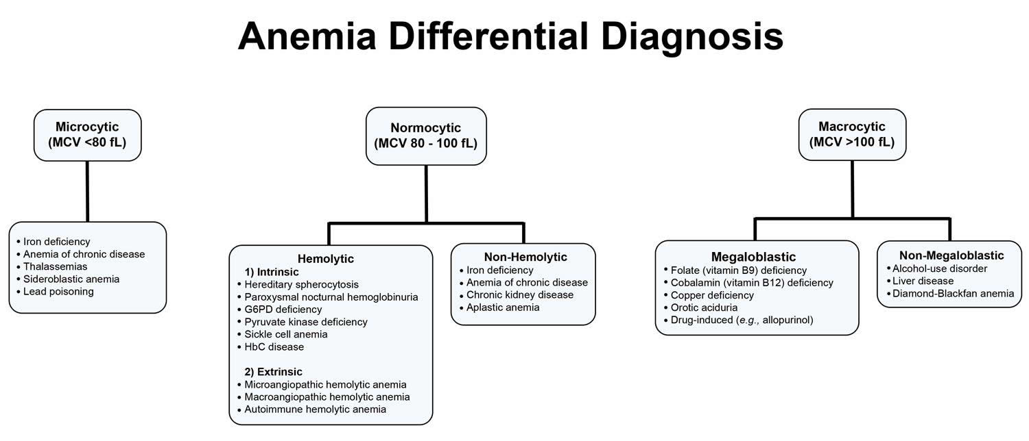anemia differential diagnosis 1
