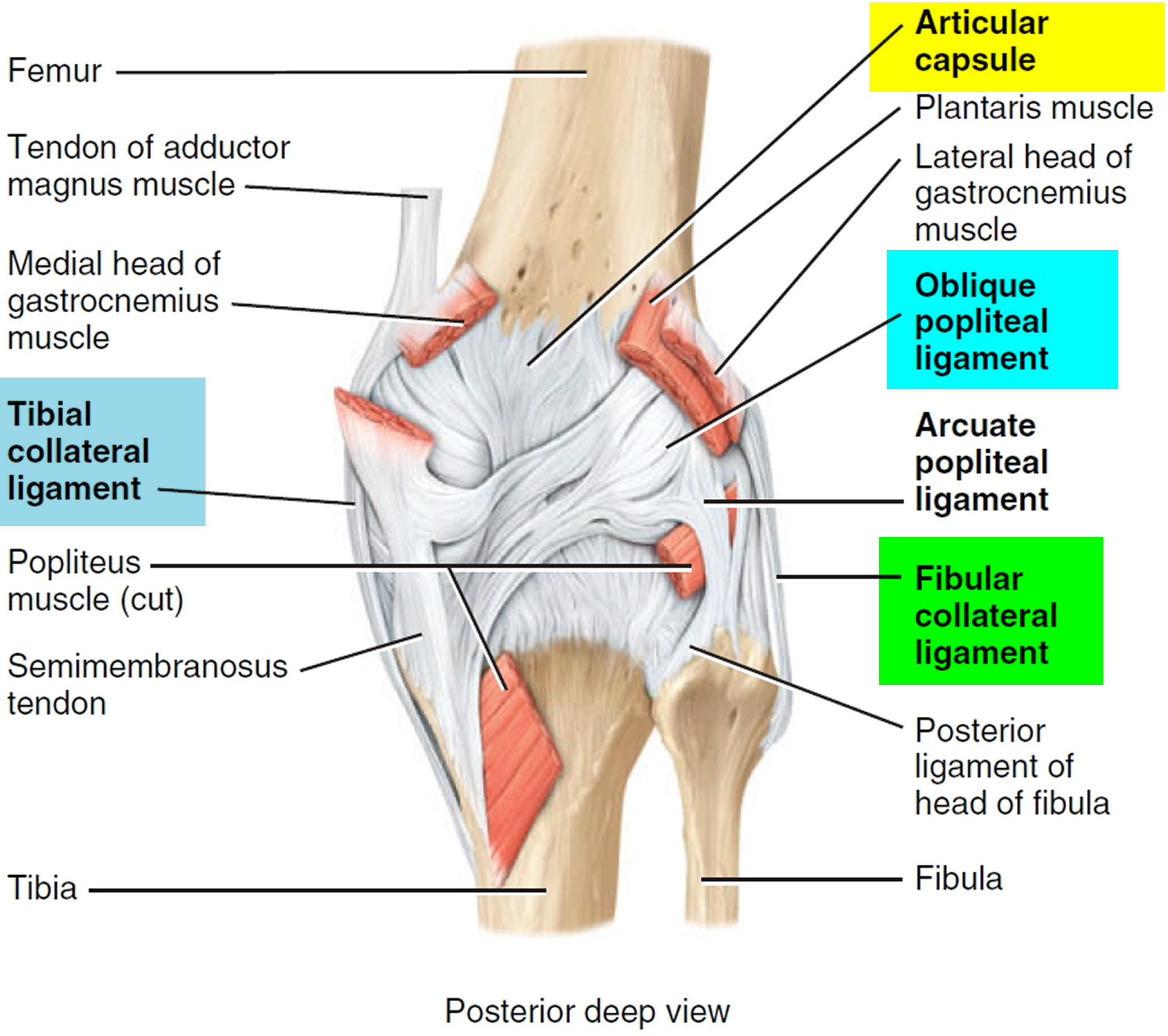 Acl Injury Symptoms Acl Injury Test Treatment Recovery Time