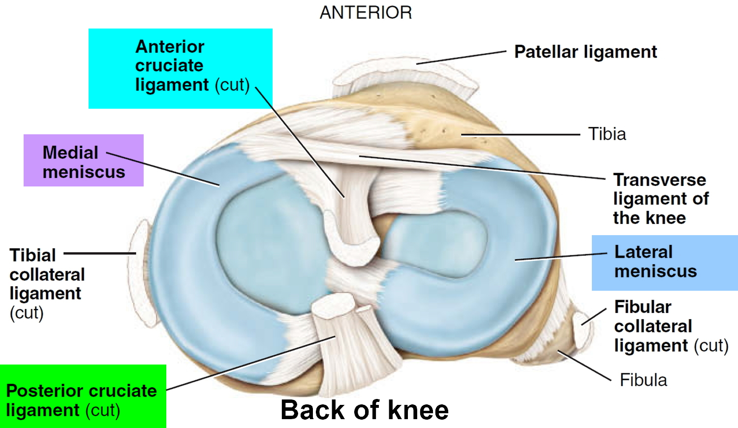 Acl injury symptoms acl injury test treatment recovery time knee joint ligaments pooptronica