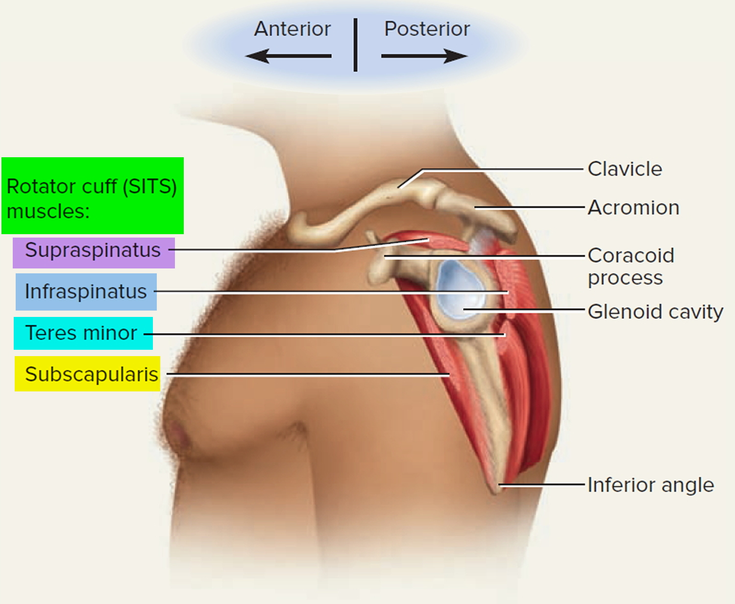 Frozen Shoulder, Adhesive Capsulitis - Causes, Surgery, Treatment