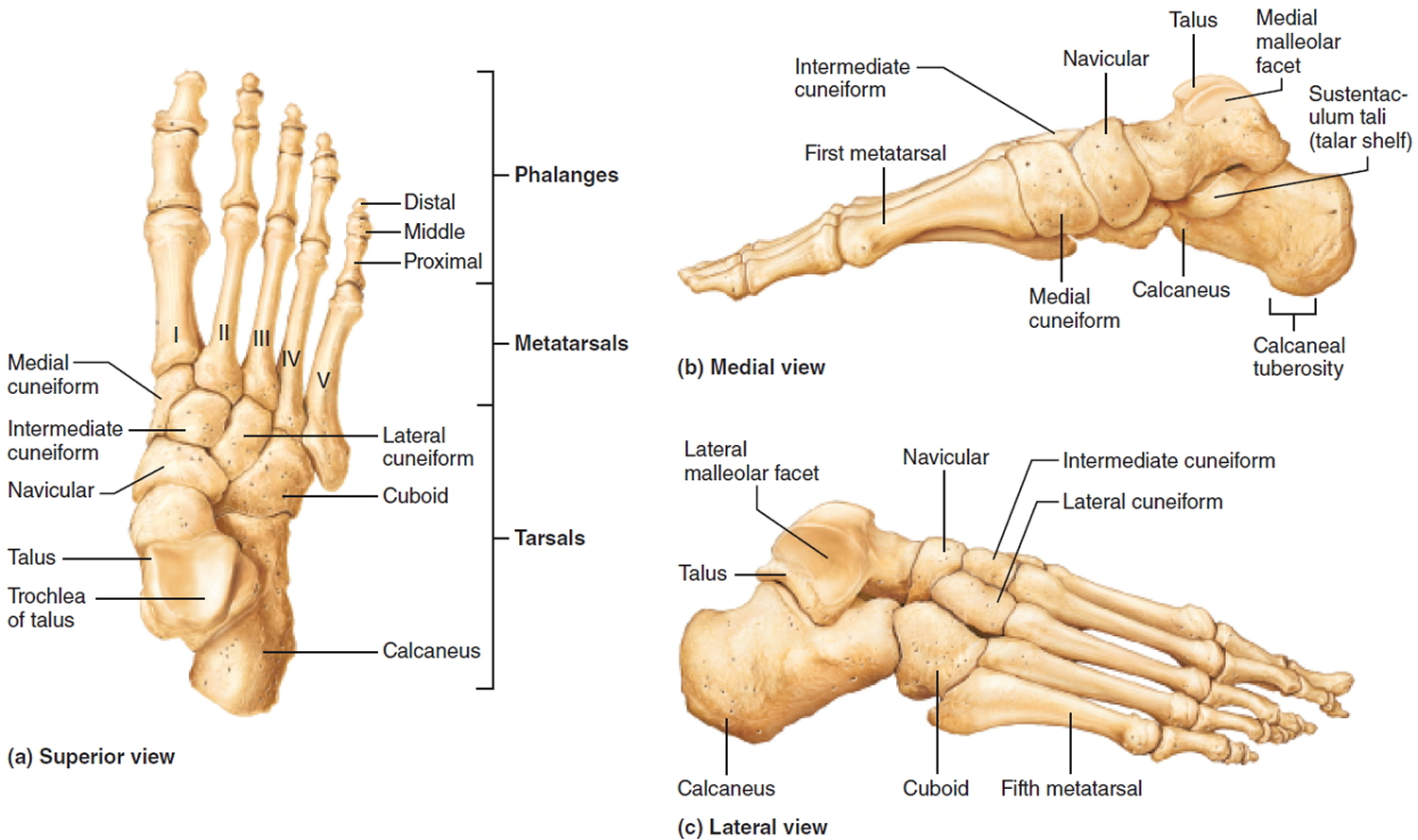 Flat Feet - Causes In Adults & Children, Symptoms, Exercises & Treatment