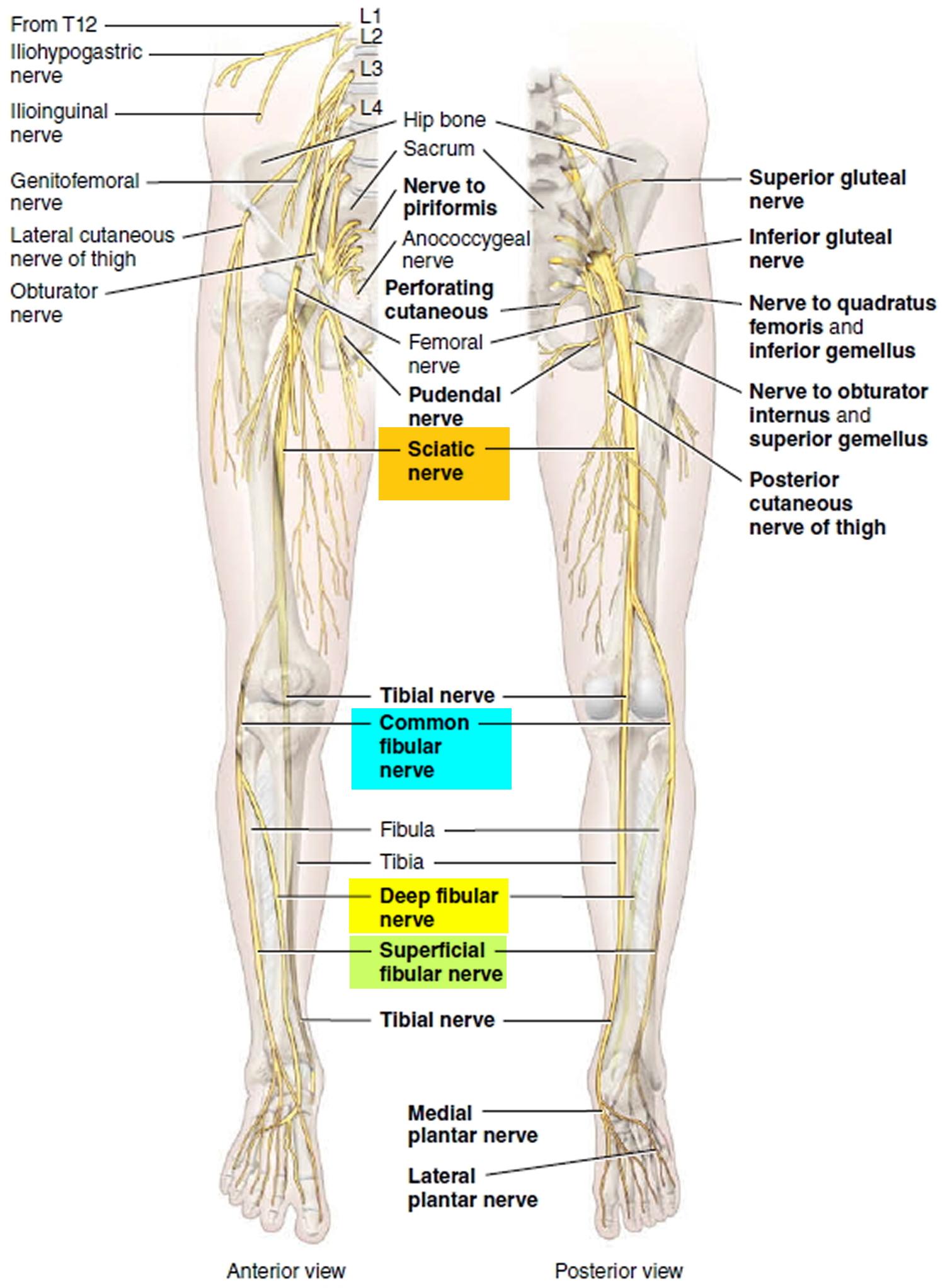 Foot Drop - Causes, Foot Drop Nerve, Symptoms, Prevention & Treatment
