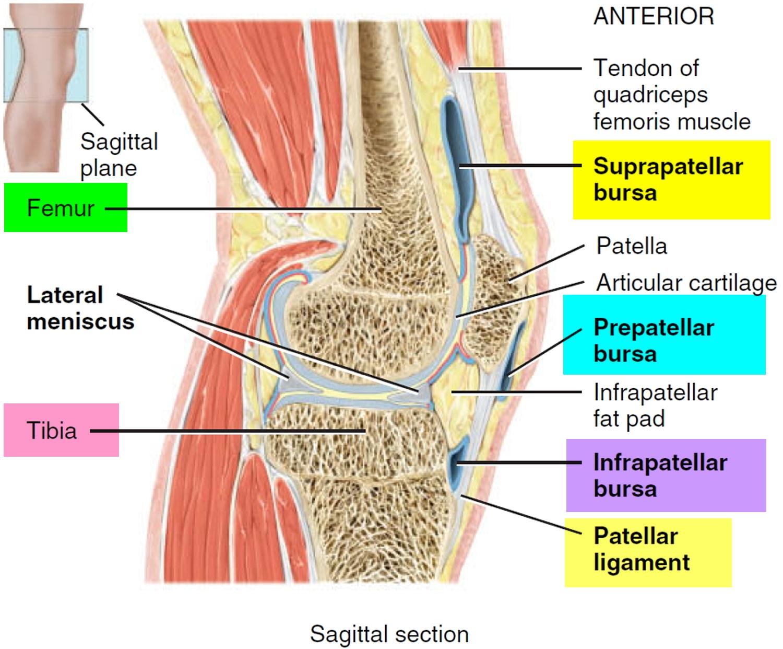 prepatellar and knee bursitis
