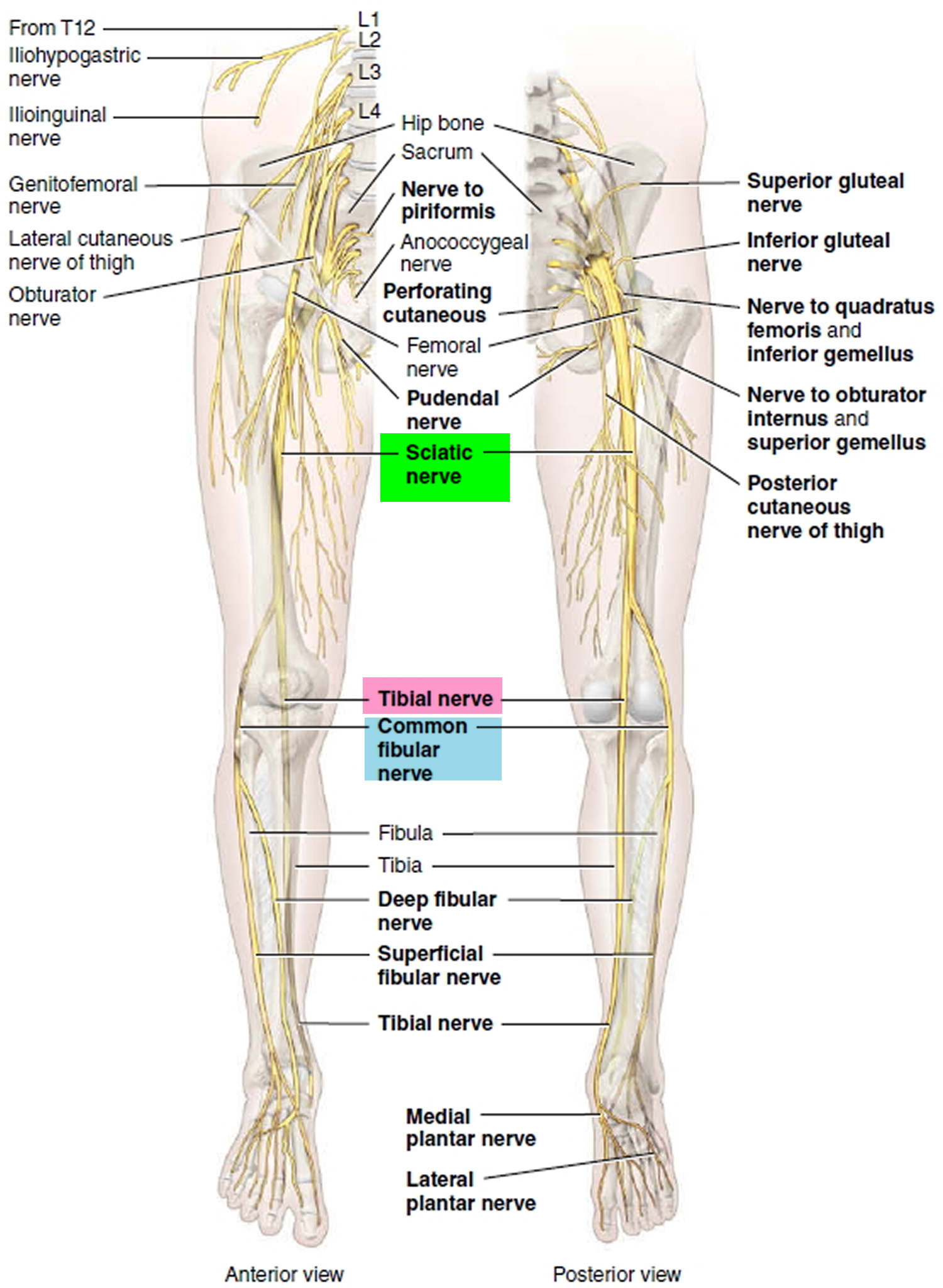 Pinched Nerve - In Neck, Arm, Shoulder - Causes, Symptoms & Treatment