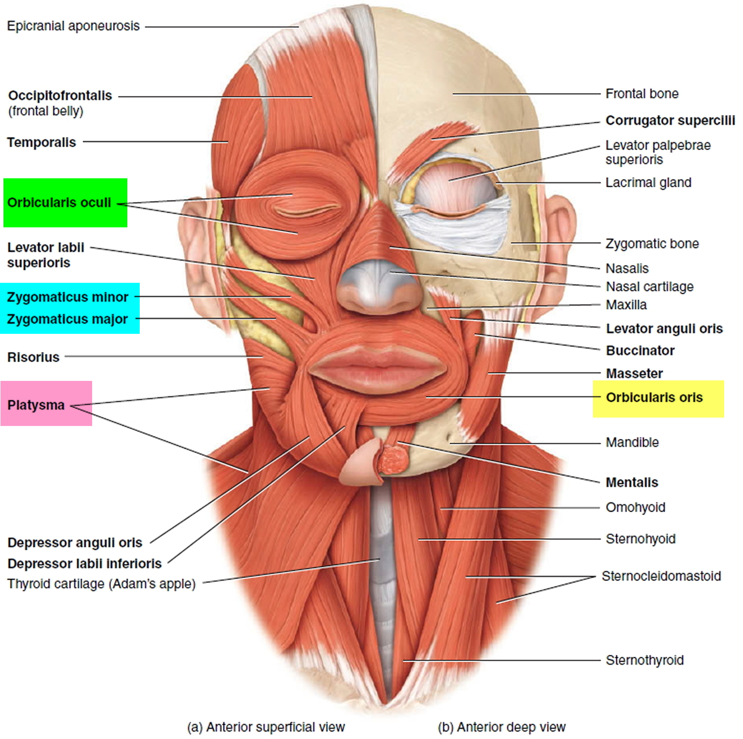 Hemifacial Spasm Causes Symptoms Botox Surgery Treatment