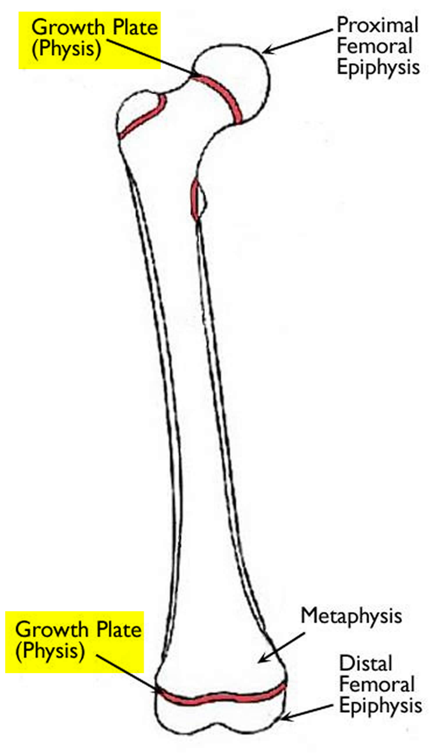 growth plate femur