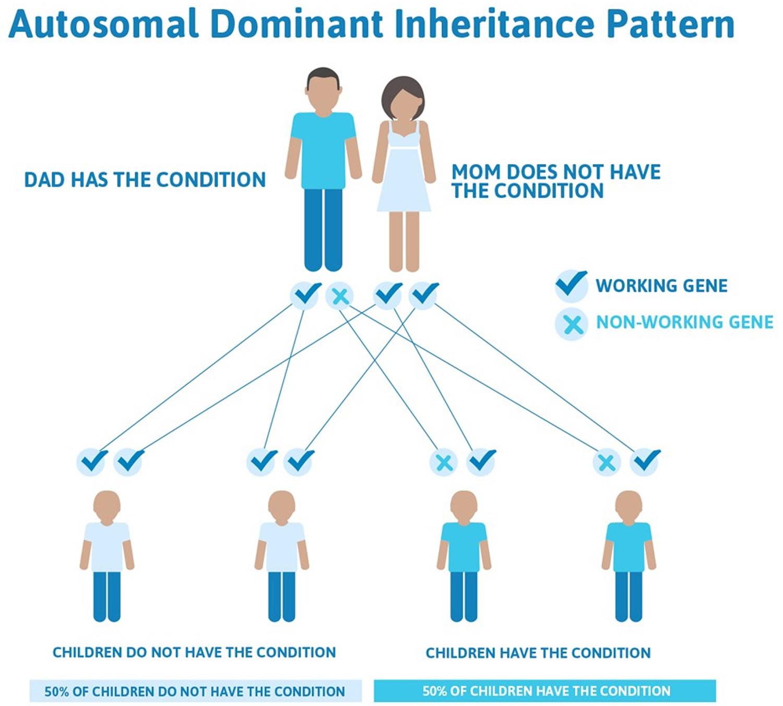 Epidermolysis bullosa autosomal dominant inheritance pattern