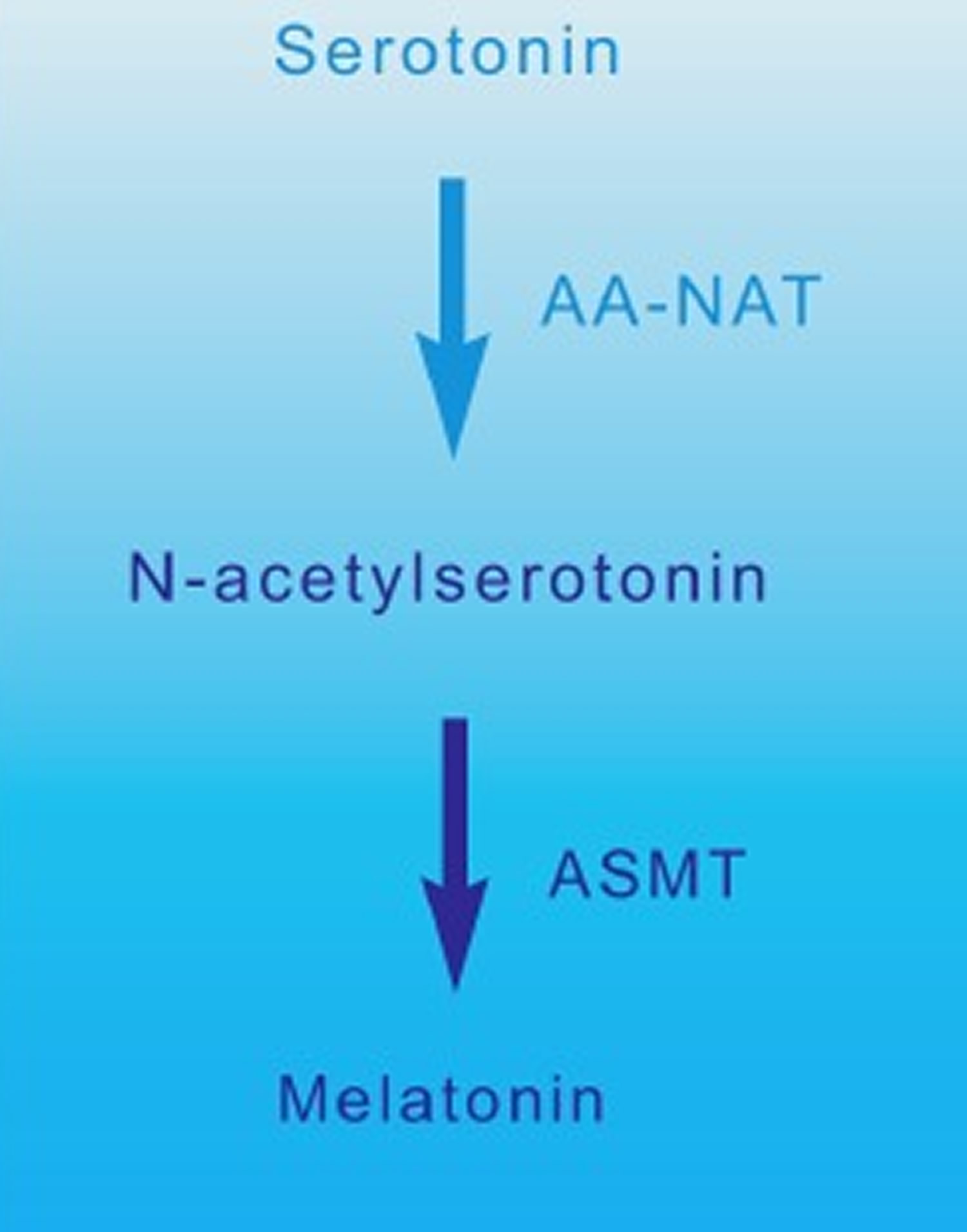 Melatonin synthesis