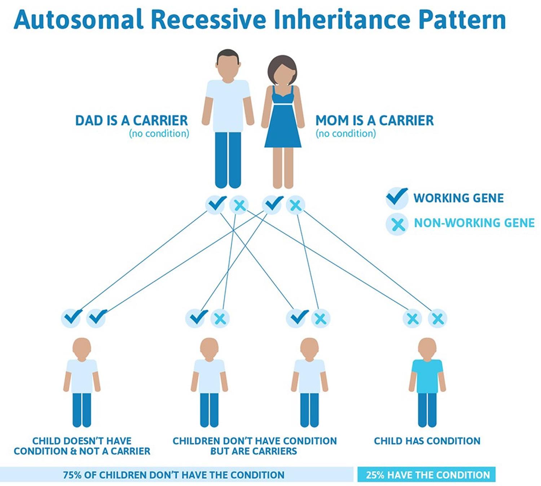 Niemann Pick disease autosomal recessive inheritance pattern