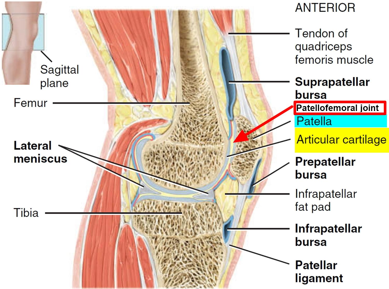 Patellofemoral Pain Syndrome - Causes, Symptoms, Treatment