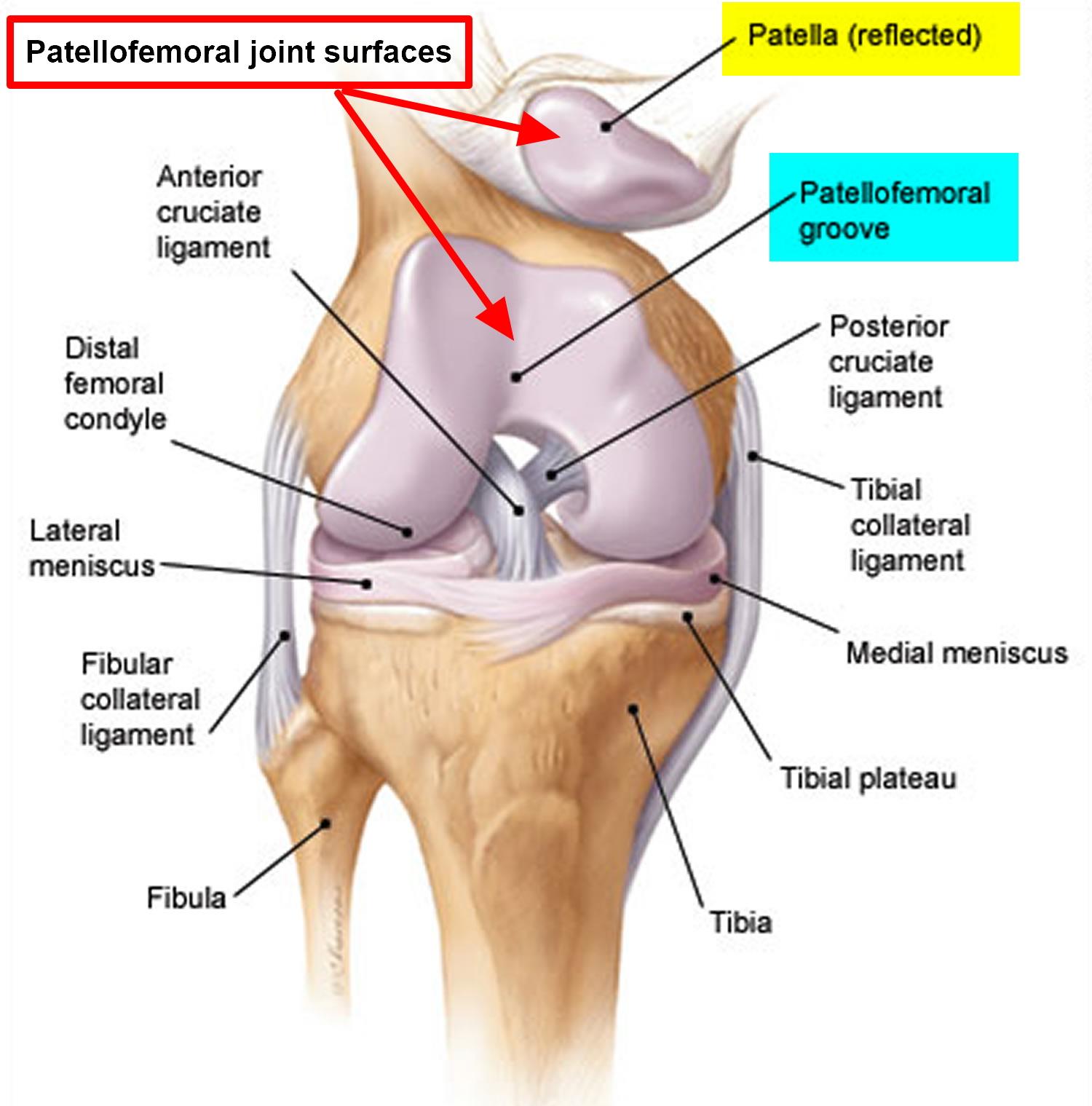 Patellofemoral Pain Syndrome Causes Symptoms Treatment