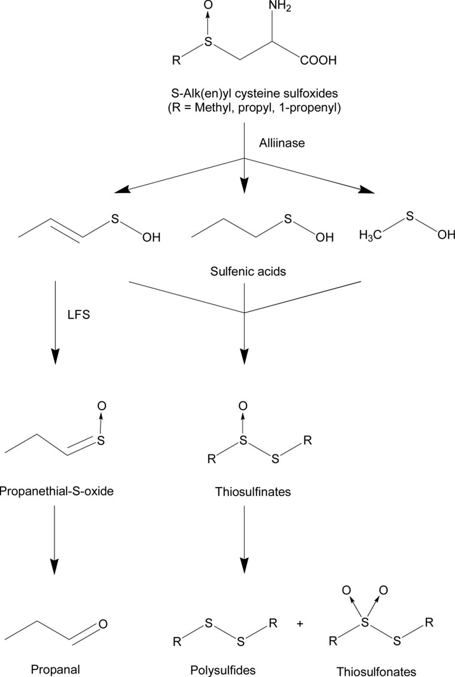 onion bioactive compounds